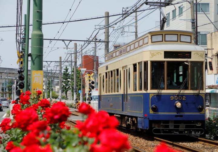 車窓からバラの景色が楽しめる東京さくらトラム(都電荒川線)